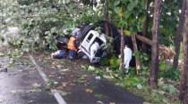 falleció conductor de camión al chocar contra árbol
